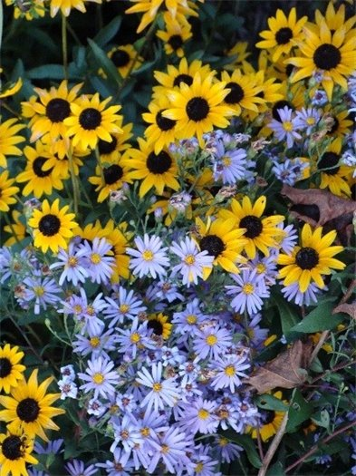 Featured Fall Plant Combination for Home & Community Gardeners