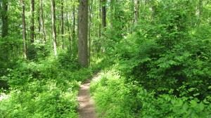 Wooded Trail at Stateline
